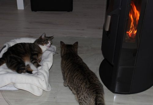 _the3cats_2014_03_16_1806