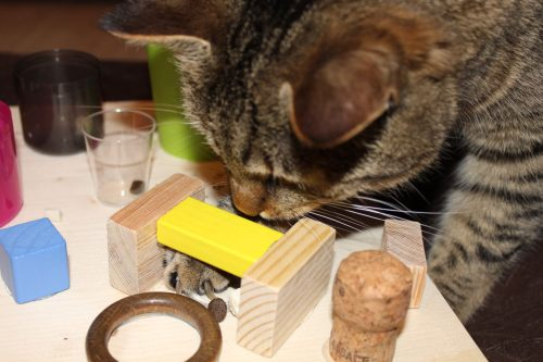 _the3cats_2014_03_26_2169