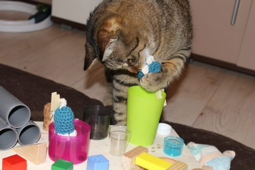_the3cats_2014_03_26_2265