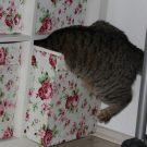Linus: Die Ur-Wampe [Der Schwabbelbauch bei Katzen]
