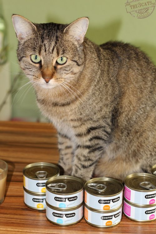 _the3cats_2014_09_19_3224