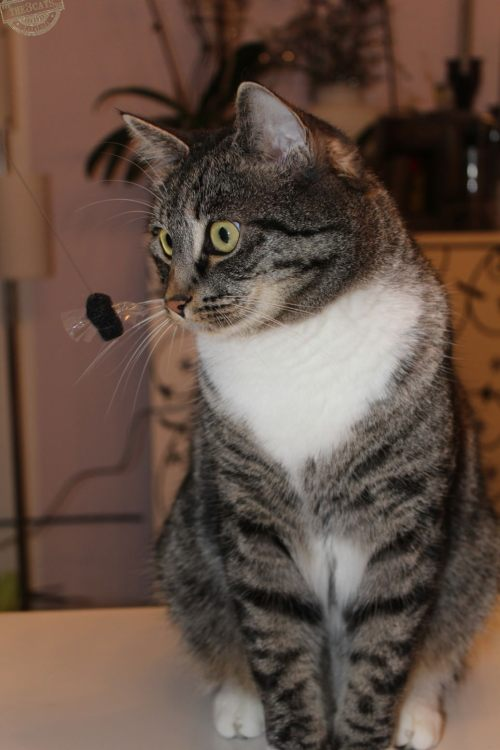 _the3cats_2015_03_19_0793