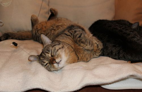 _the3cats_2015_03_20_1296