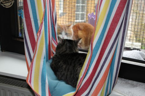 _the3cats_2015_03_27_1885