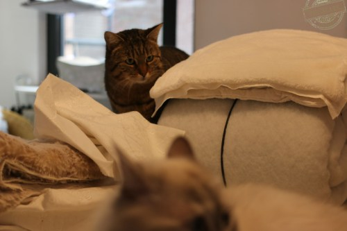 _the3cats_2016_03_06_4861