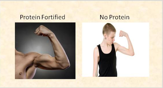 Illustrating the difference between eating protein and not eating protein