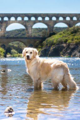 Pont du Gard avec son Chien