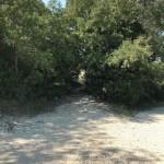 Photo 6 - Passage sous les arbres