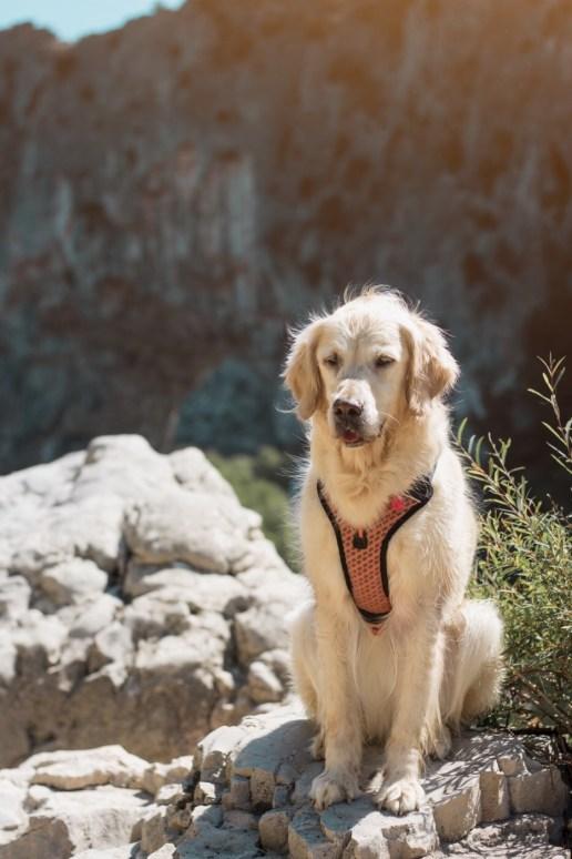 Le Pond d'Arc avec son chien