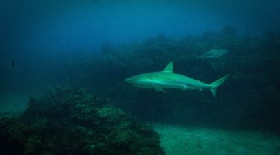 Scuba Diving in Ambergris Caye (Belize)