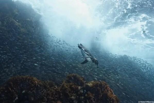 Photo Credit: Galapagos Master Liveaboard