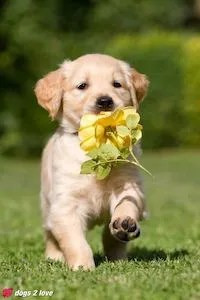 Blossom Tips Dealing With Guilt After a Pet's Death