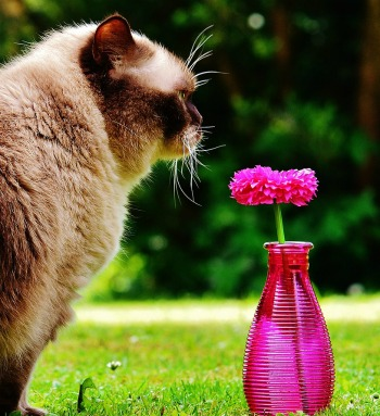 """Say """"Meeeoowww"""" and You Will Blossom Like a Cat"""