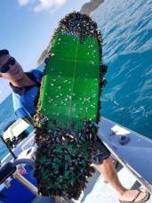 BARNACLES GALORE: The tow board when it was first collected from the ocean, mistaken for a ball of weeds. Picture: Supplied