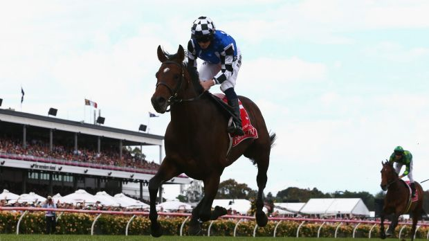 European success: German stayer Protectionist won last year's Melbourne Cup.