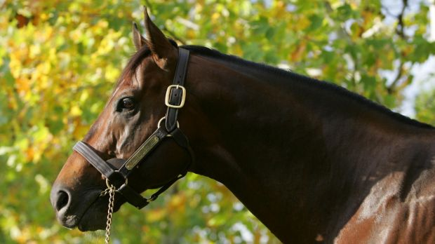 Still kicking goals: Redoute's Choice progeny continue to perform well at yearling sales.