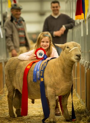 Hannah Badcock, 7, of Tasmania in the Livestock Pavilion at the Royal Melbourne Show on Sunday, with a champion ...