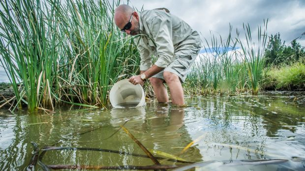The ACT environment department released 60,000 fingerlings into ACT ponds and lakes. Aquatic ecologist Mark Jekabsons.