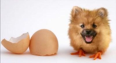 Dog Duck