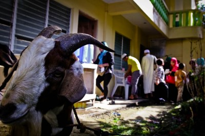 A goat is tied inside the mosque compound in Los Baños, Laguna during Eid al-Adha. Photo by: Chris Quintana.