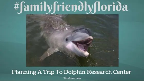 Our Family Is Planning To Visit The Dolphins