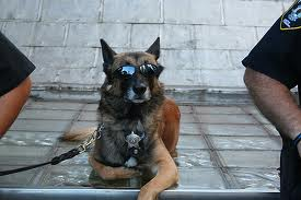 Working dog waiting to put you in jail