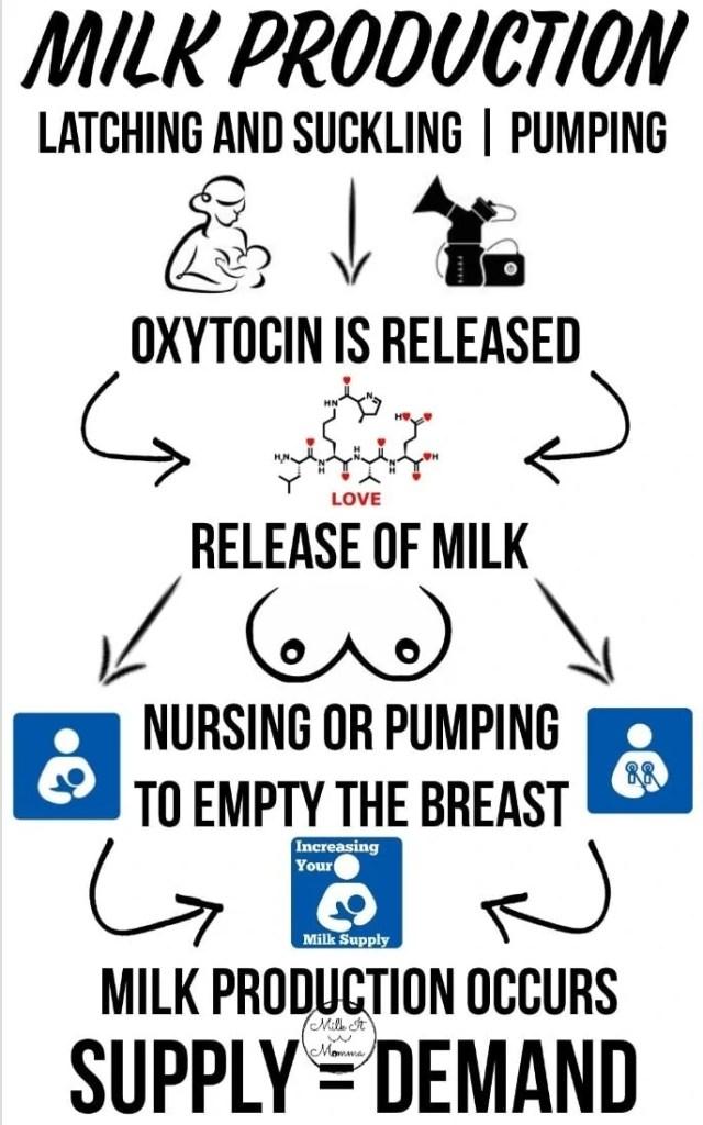 breastfeeding-supply-demand