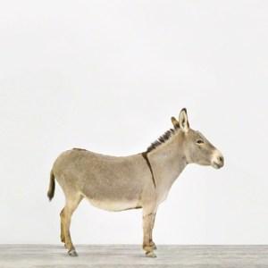 animal-prints-animal-art-photography-