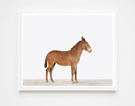 animal-prints-animal-art-photography-01