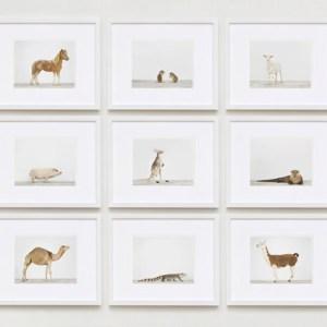 animal-prints-animal-art-photography-04