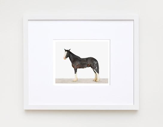 animal-prints-animal-art-photography-horse
