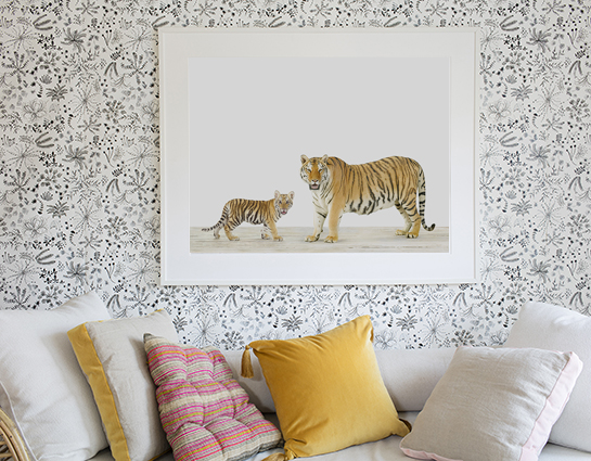 baby-animal-prints-animal-art-photography-kindred.php