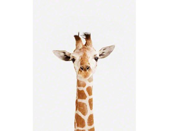 b371e2431692 Baby Giraffe Little Darling by Photographer Sharon Montros — The ...