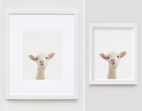 The Animal Print Shopwww.theanimalprintshop.com