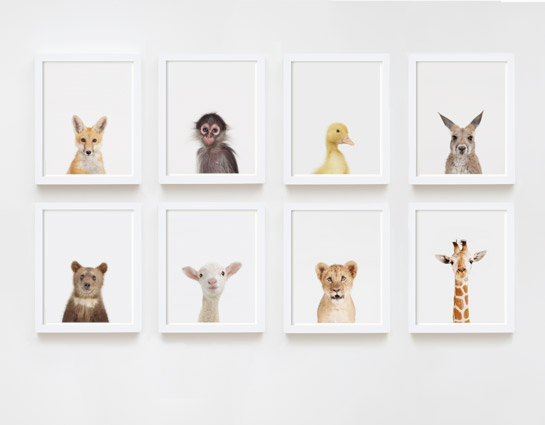 baby-animal-prints-faces-crown-nursery-decor-05