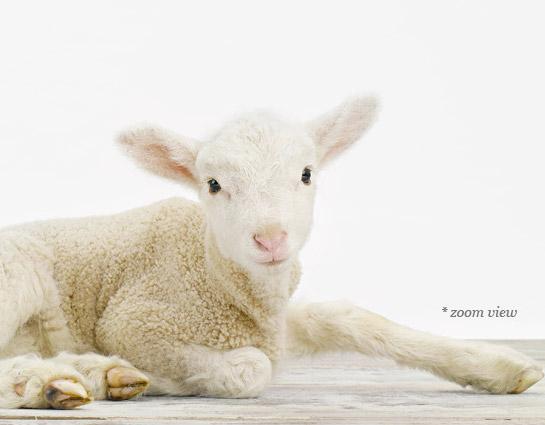 baby-animal-prints-nursery-art-2.php