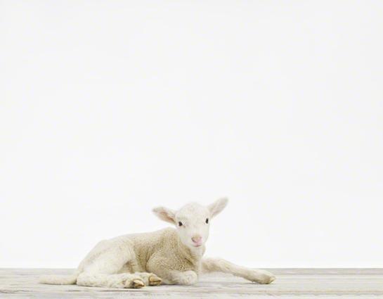 baby-animal-prints-nursery-art.php