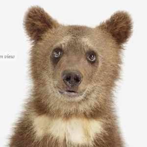 bear-cub-art-for-nursery