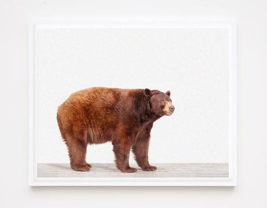 bear-photography-sharon-montrose-2.php
