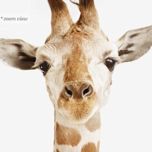 giraffe-baby-safari-decor-art-for-nursery