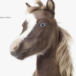 horse-baby-decor-art-for-nursery