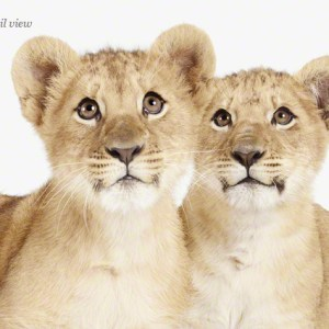 The baby-animal-prints-nursery-art Print Shop