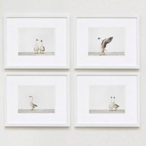 image-3.sharon-montrose-flamingo-bird-ar