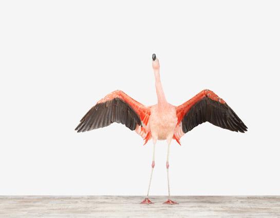 sharon-montrose-flamingo-bird-ar