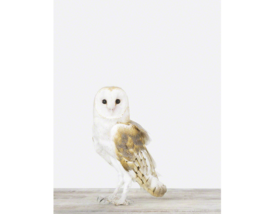 owl-animal-art-photography-sharon-montrose