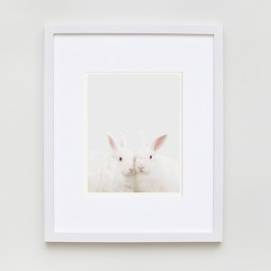 sharon-montrose-animal-photography-01