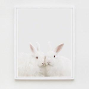 sharon-montrose-animal-photography-03