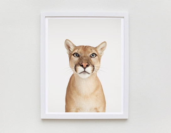 sharon-montrose-animal-photography-print-01