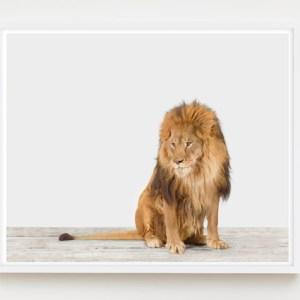sharon-montrose-animal-photography-print-03
