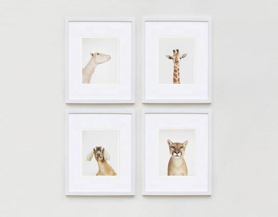 sharon-montrose-animal-photography-print-05